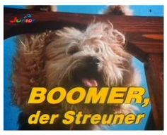 Boomer, the stray - Ich bin Retro - Thin Cat web Good Old Times, The Good Old Days, New Tv Series, As Time Goes By, My Childhood Memories, Old Tv, Baby Cats, Retro, Do You Remember
