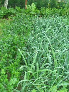 Walled Garden, Herbs, Fenced Garden, Herb, Medicinal Plants