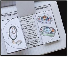 Prokaryotic and eukaryotic cell comparison cut and paste venn diagram for interactive science notebooks.