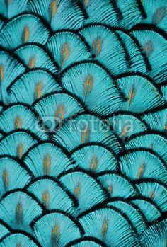 turquoise veren