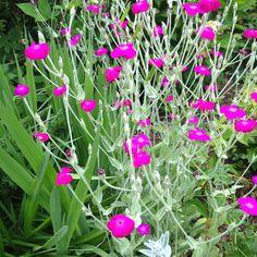 Stern flowers