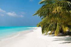 Meeru Island Resort & Spa | North Male' Atoll, Malediven. Meine Hochzeitsreise. Der Urlaub war perfekt!