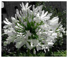 Flor do Bonfim | Fotografia de Daniele Dallavecchia | Olhares.com