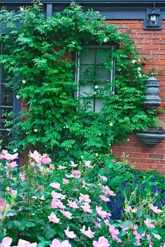 A repeat-blooming 'Malvern Hills' rambling rose climbs this brick facade, helping to tie the house to the landscape.