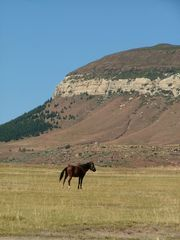 Discover the world through photos. Horse Breeds, Continents, South Africa, Tourism, Pony, Horses, Mountains, World, Travel