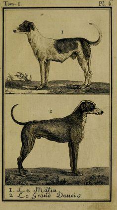 """""""Dogs"""" Histoire naturelle, générale et particulière, avec la description du Cabinet du roi. Tome I.  Paris,De l'Imprimerie royale,1750-1804.  biodiversitylibrary.org/page/25697133"""