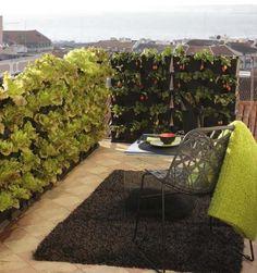 Dicas Para Montar Uma Horta Em Casa