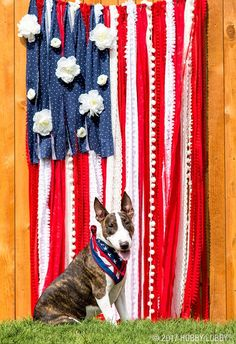 DIY afun and festive photo backdrop for your 4th of July bash! To DIY: 1. Tie rope horizontally between stakes or fence posts. 2. Cut long strips of red and white fabric, and shorter strips of blue fabric. 3. Tie fabric and decorative trim onto rope. 4. Hot glue white flowers to fabric.