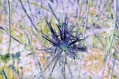 'feathery blossom' by ursfoto on artflakes.com as poster or art print $16.63
