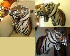 life size tiger head mount, paper mache glass eyes acrylic paint