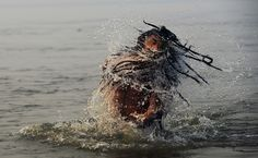A Sadhu comes up after dipping in the waters of the Sangham in Allahabad, on January 14, 2013. (Roberto Schmidt/AFP/Getty Images)