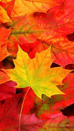 Fall Five -- iPad 5 Wallpaper