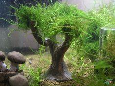Garnelenbaum Nr.6 Moosbaum