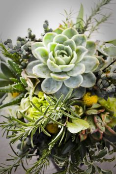 Succulents and Rosemary Sprigs