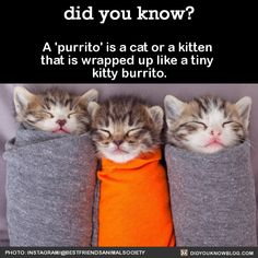 A 'purrito' is a cat or a kitten that is wrapped up like a tiny kitty burrito. Source