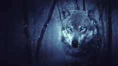 Wolf wallpaper, winter, fantasy, forest, snowing, wild animal
