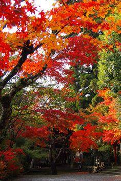 Yep...Donna Loves Autumn in the East