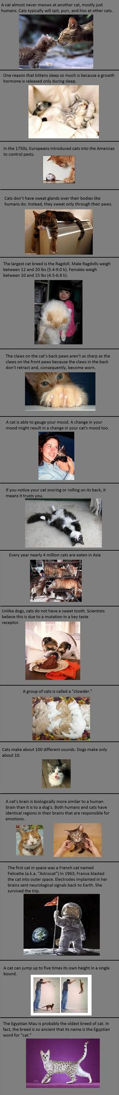 Some facts about cats.