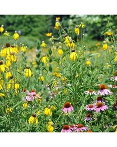 Our Native Midwest Wildflower Seed Mixture contains 21 wildflowers, including Prairie Aster, Blazing Star, Butterfly Weed and more, that are native to the Midwest. Plant native varieties to help preserve your local eco-system and to help the pollinators. Hanging Succulents, Hanging Planters, Butterfly Weed, Star Butterfly, American Meadows, Wildflower Seeds, Fall Plants, Black Eyed Susan, Flower Planters