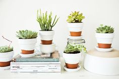 How to Paint Terra Cotta Pots + Plant Succulents for Beautiful Decor!