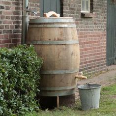 Used wine barrel for collecting rain water.