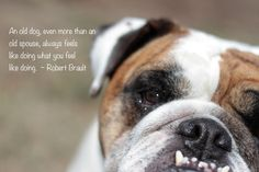 English Bulldog Wall Art by DubayDesigns on Etsy, $20.00