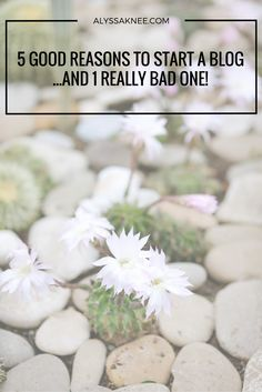 My 5 good reasons to start a blog... and 1 REALLY bad one!