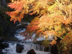 Acers in Kurokawa Japan 387519_172719692824612_1199514378_n.jpg (960×720)