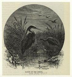 Haunt of the heron.