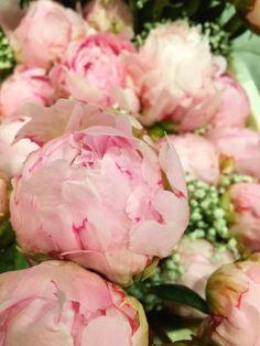 Peony roses