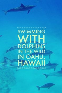 A guide to swimming with dolphins in their natural habitat (the ocean) in Oahu, Hawaii :