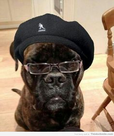 Samuel L. Jackson as a Dog  Omg I can't stop laughing!!