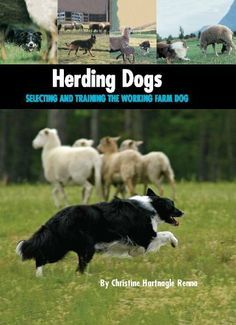 1000+ images about Stockdog stuff on Pinterest | Herding ...