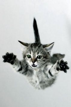 It's a bird, it's a plane, it's super cat!