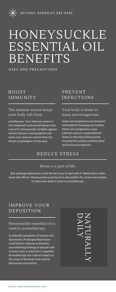 Honeysuckle Essential Oil Benefits, Uses, and Precautions Honeysuckle Plant, Mesh Yoga Pants, Esential Oils, Oil Shop, Oil Benefits, Oil Uses, Natural Healing, Immune System