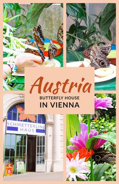 Butterfly House in Vienna is a unique tropical oasis, peaceful and relaxing, and a must-see sight if you are visiting this beautiful city. #Vienna #Austria #TravelRealizations #Europe #Butterflyhouse