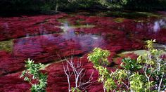 Caño Cristales is a river located in the Serrania de la Macarena province of Meta, Colombia. Rainbow River, Imagines, Nymph, Outdoor Life, South America, Trip Advisor, The Good Place, Beautiful Places, Beautiful Scenery