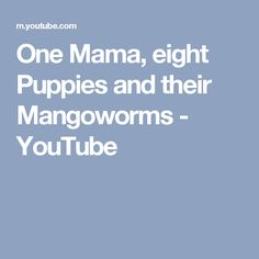 One Mama, eight Puppies and their Mangoworms - YouTube