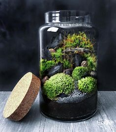 A large glass jar houses a miniature landscape made up of several varieties of live moss and slate rock mountains. This terrarium is easy to care for and requires only minimal watering and indirect light. Each piece comes with complete care instructions and free mini spray bottle for