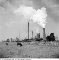 Staatsmijn Maurits, Geleen-Lutterade (1952)