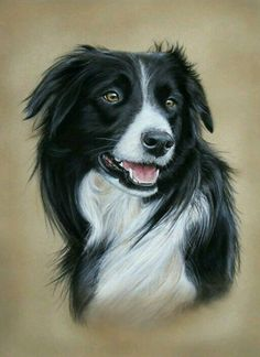 Border Collie Dog Art by Coral Rose Art Animal Paintings, Animal Drawings, Dog Drawings, Drawing Borders, Border Collie Art, Drawn Art, Dibujos Cute, Collie Dog, Rose Art