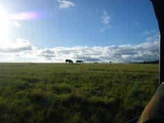 Safari park near Plettenberg, South Africa.