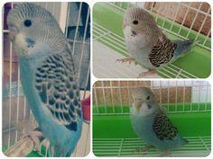 Özgürlük ve ötesine uç minik kuş ! #bird