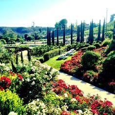 Beautiful vineyard in Temecula, called Leoness.