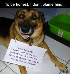 Funny Pictures Of The Day  38 Pics #puppyshaming #dogshaming