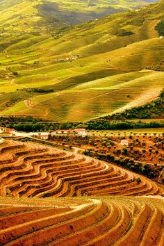 Douro valley #Portugal - Explore the World with Travel Nerd Nici, one Country at a Time. http://travelnerdnici.com