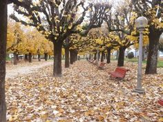 Fall, Autumn, Fall Season