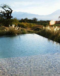 infinity edge pool...with wild plant edge