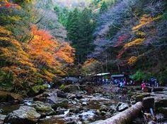 「赤目四十八滝」の画像検索結果