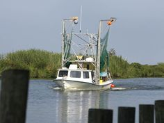 MS Gulf Coast Shrimping